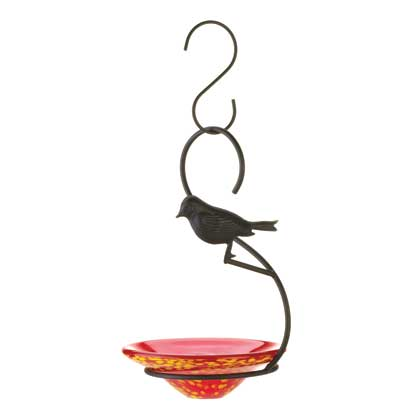 Orchard Oriole Bird Feeder